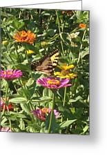 Butterfly Breakfast Greeting Card