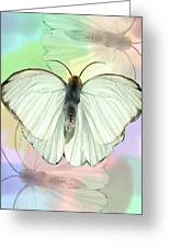 Butterfly, Butterfly Greeting Card