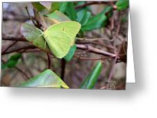 Butterfly Camouflage Greeting Card