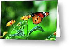 Butterfly Greeting Card by Chaza Abou El Khair