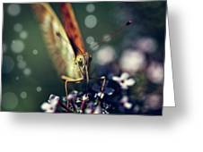 Butterfly Close Up Greeting Card