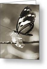 Butterfly Close-up Greeting Card