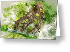 Butterfly Close Up Digital Watercolor On Photograph Greeting Card