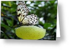 Butterfly Cocktail Time Greeting Card