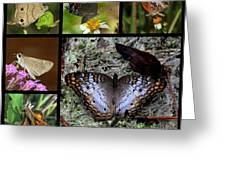 Butterfly Collage 1 Greeting Card