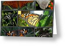 Butterfly Collage 2  Greeting Card by April Wietrecki Green