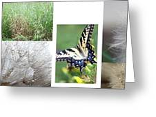 Butterfly Collage  Greeting Card