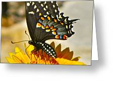 Butterfly Collection Greeting Card