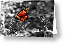 Butterfly Color On Black And White Greeting Card