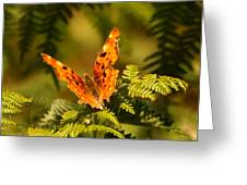 Butterfly Comma Greeting Card