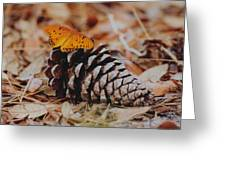 Butterfly Cone Greeting Card
