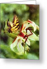 Butterfly Daylily Greeting Card