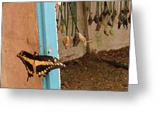 Butterfly Drying His New Wings Greeting Card