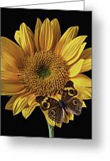Butterfly Eyes Greeting Card