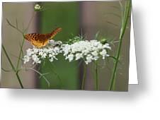 Butterfly Feeding Greeting Card