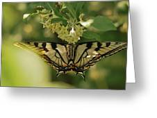 Butterfly From Another Side Greeting Card