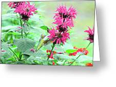 Butterfly Garden 26 Greeting Card