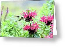 Butterfly Garden 5 Greeting Card