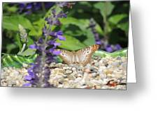 Butterfly Garden Greeting Card