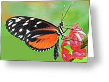 Butterfly  Golden Helicon Greeting Card
