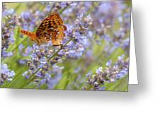 Butterfly Heaven Greeting Card