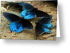 Butterfly Huddle At The Puddle Greeting Card