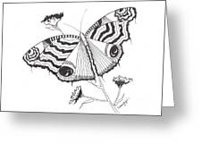 Butterfly In Black And White Greeting Card