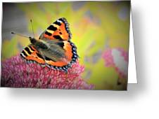 Butterfly In Bloom Greeting Card