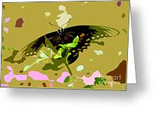 Butterfly In Color Greeting Card