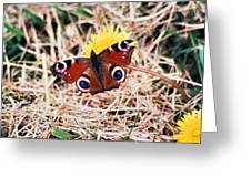 Butterfly In Ireland Greeting Card