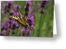 Butterfly In Lavender Greeting Card