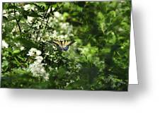 Butterfly In Muted Green Background Greeting Card