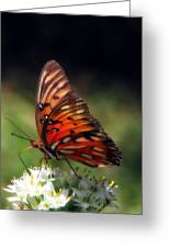 Butterfly In Orton Greeting Card