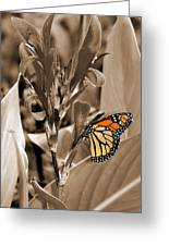 Butterfly In Sepia Greeting Card