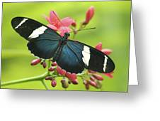 butterfly in Square Greeting Card