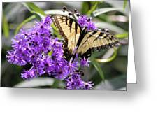 Butterfly In Summer Greeting Card