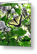Butterfly In The Lilac No. 1 Greeting Card
