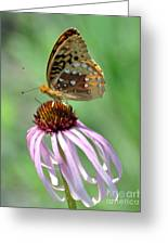 Butterfly In The Wind Greeting Card