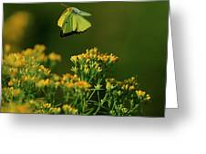 Butterfly-ing Greeting Card
