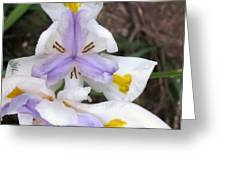 Butterfly Iris Greeting Card