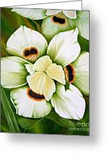 African Butterfly Iris Greeting Card