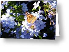 Butterfly Iv Greeting Card