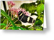 Butterfly Joy Greeting Card