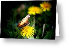 Butterfly Kisses Greeting Card by Karen M Scovill