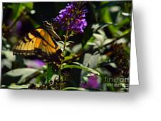 Butterfly Kisses Greeting Card