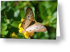 Butterfly Land Greeting Card