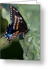 Butterfly Laying Eggs Greeting Card