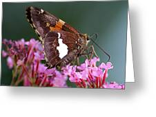 Butterfly-licking Greeting Card