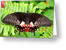 Butterfly Maze Greeting Card