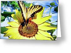 Butterfly Meets Sunflower Greeting Card